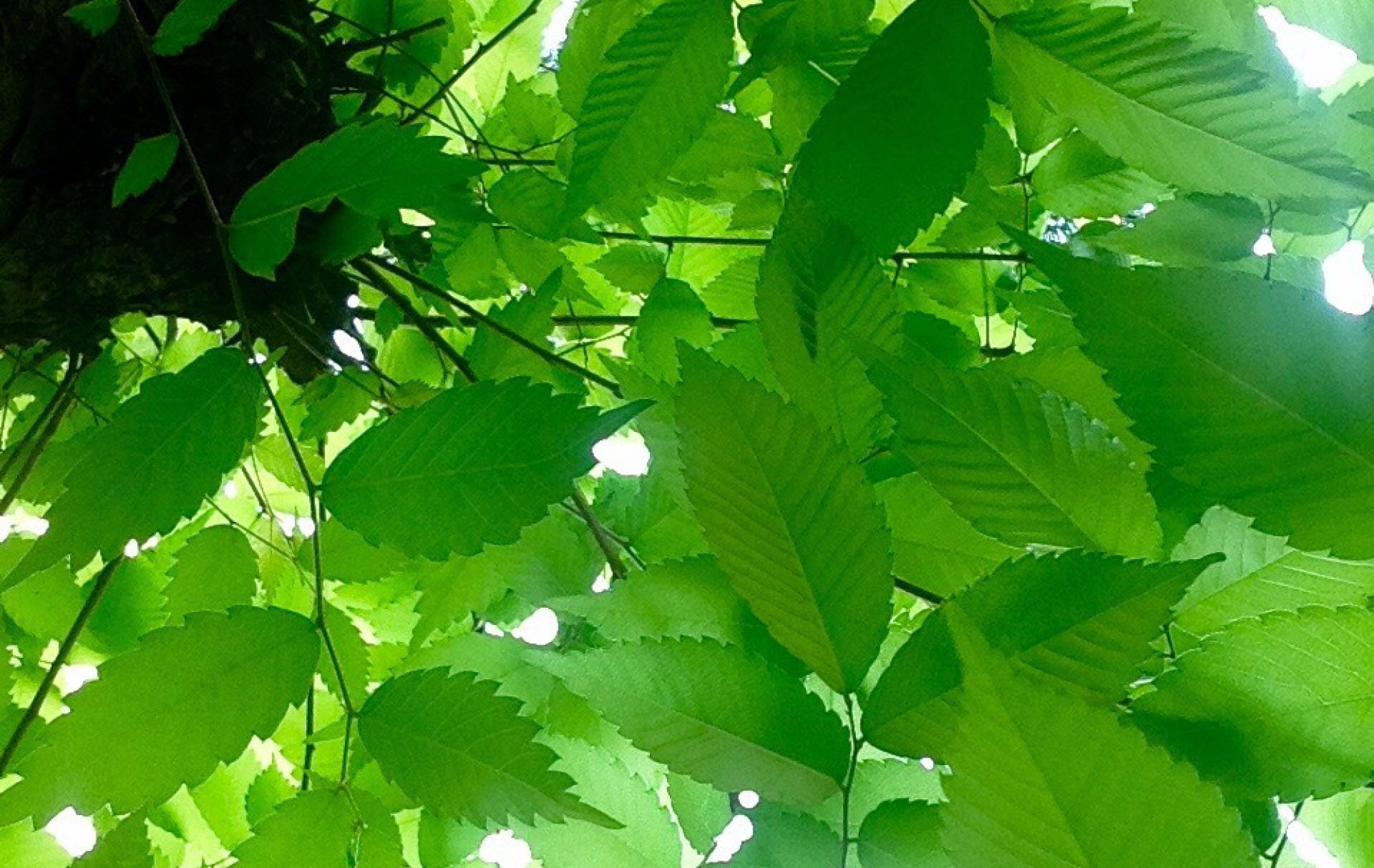 自然の薬箱 ボディケアルームのブログ